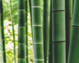 bienfaits-linge-fibre-bambou.jpg